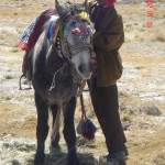 kailash nomad and his horse