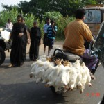 kerala 1 man with chickens