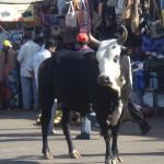 mysore chamundi bull