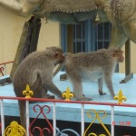 mysore chamundi monkeys